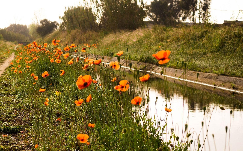 Poppy Pathway