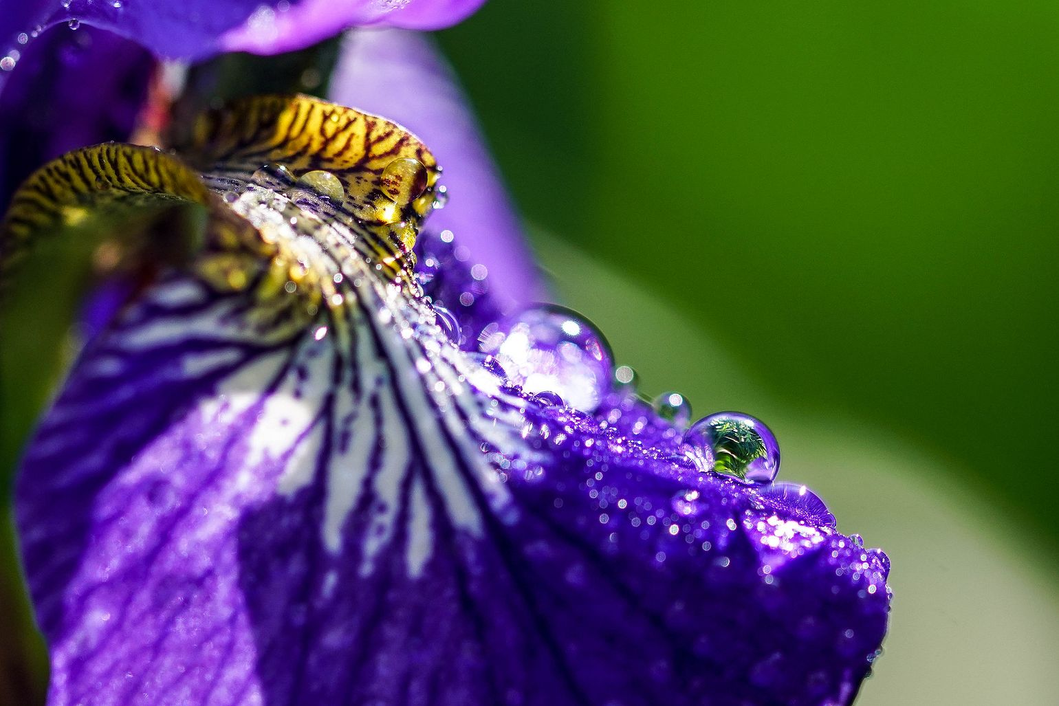 irys and waterdrops