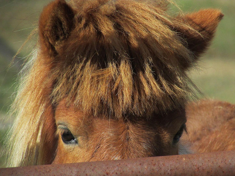 Pony Peek