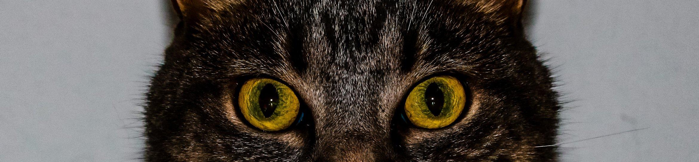 Kiwi's eyes