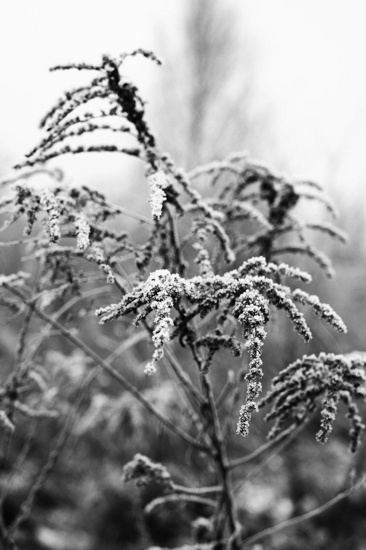 Frost in B&W