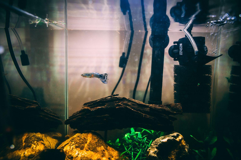 Meet Mani, first fish of Ami